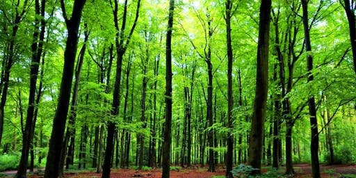 """Voice Of The Wood: Forest Bathing with """"One Impulse"""""""