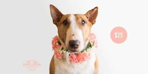 Floral Collar Portraits for ElderDog