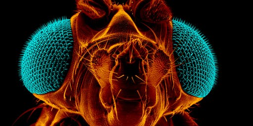 The Mighty Fruit Fly Show