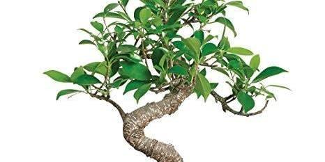 Plant A Bonsai