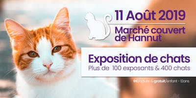 Exposition internationale de chats à Hannut | AAAF