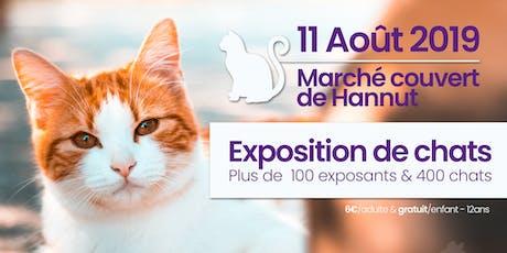 Exposition internationale de chats à Hannut | AAAF billets