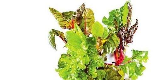 Introduction to Aeroponic Gardening