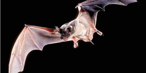 Basically Bats