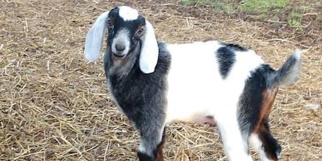 Berlin TSC Goat 911 tickets