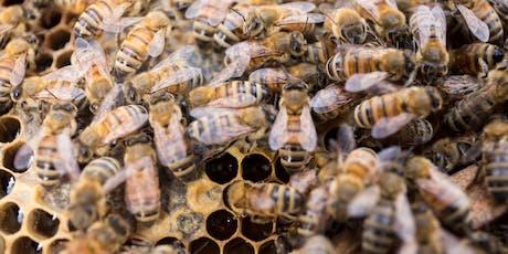 Beekeeping 101 tickets