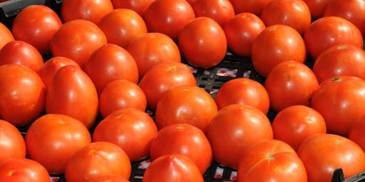 Wholesale Tomato Workshop