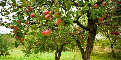 Tales From The Orchard - Stories From The Old Days (with pies!) tickets
