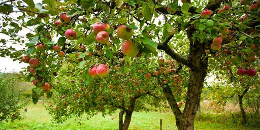 Tales From The Orchard - Stories From The Old Days (with pies!)