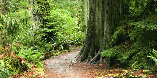 Forest Walk Meditation Series