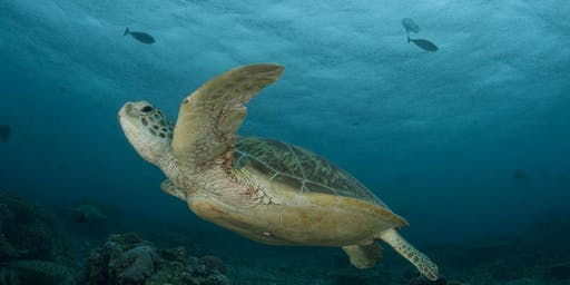 An Afternoon of Tea and Treats to benefit Sea Turtles - Win AZ Resort Stay