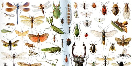 Making Insects: A Guide to Restoring the Little Things That Run the World tickets