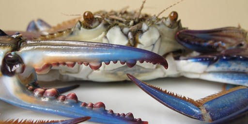 Wallaroo Blue Crab Festival -Session 1- 18+