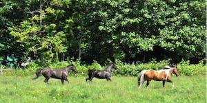 Healing Horses, Healing Breath, Healing Sound & Energy...