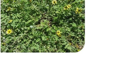 Post-fire weed ID and non-chemical control of pasture weeds
