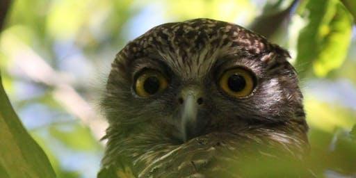 Powerful Owl Guided Walk