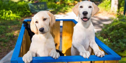 Training Guide Dogs for the Blind