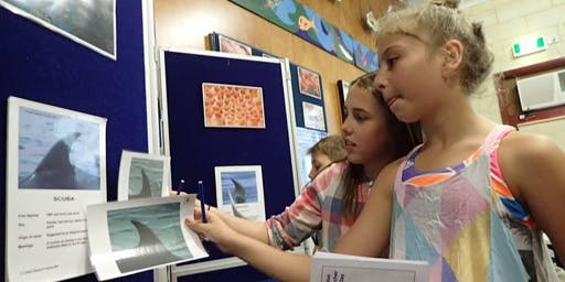Casey Dolphin Researcher Holiday Program