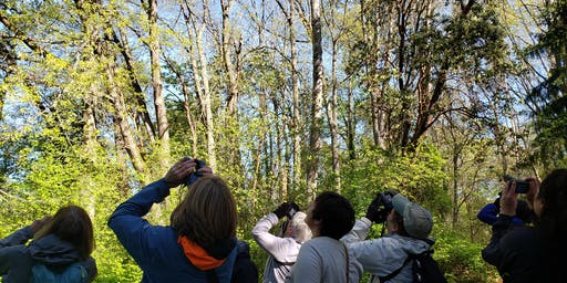 June Bird Walk