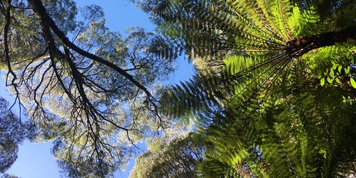 Forest Bathing (Shinrin Yoku) in the magnificent Otways