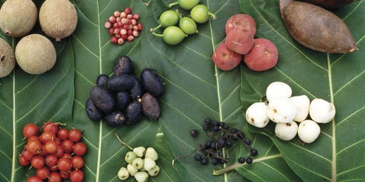 Native gardens for food and medicine