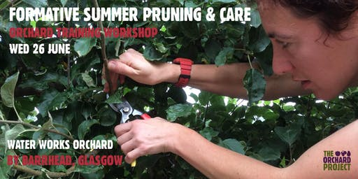 Summer formative pruning and tree care (Glasgow)