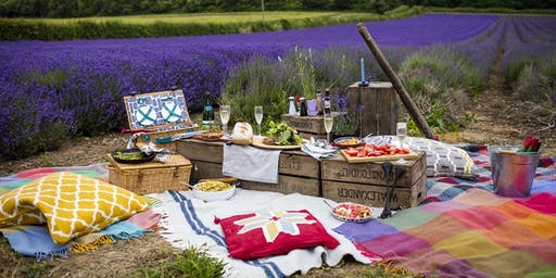 Pop-Up Picnics in the Lavender Fields