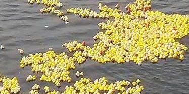 Wetherby Lions Duck Race