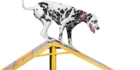 AGILITY TASTER @ DSPCA tickets