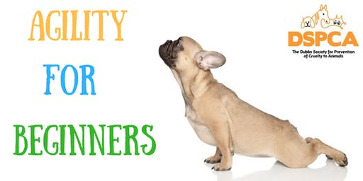 AGILITY FOR BEGINNERS, Saturday, DSPCA
