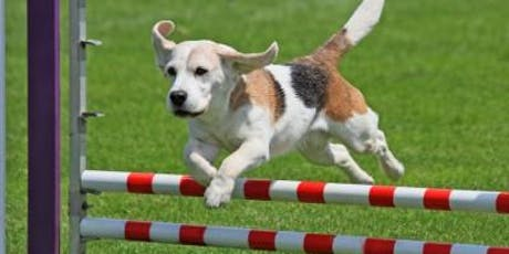 Agility Level 2 @ The DSPCA tickets