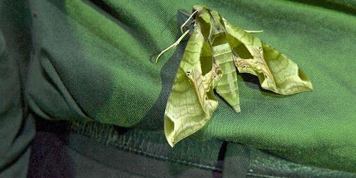6th Annual Moth Night, in Taconic State Park
