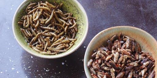 Insekten: Protein der Zukunft (Besuch bei Essento)
