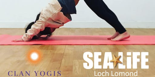 Yoga Under the Sea at SEA LIFE Loch Lomond