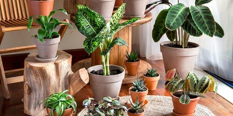 Houseplants 101 - Beginners class for the wannabe houseplant enthusiast tickets