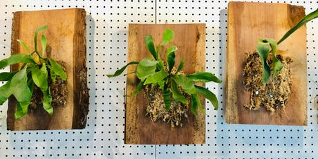 Mounted Staghorn Fern Workshop tickets