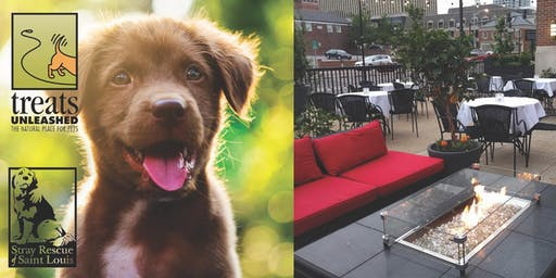Pups on the Patio
