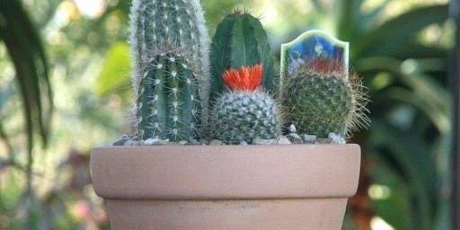 Crazy for Cactus - Build Your Own Cactus Dish Garden