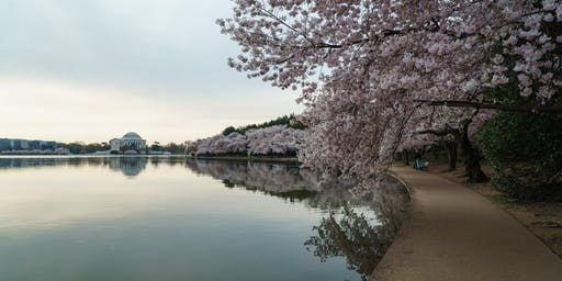 Tree Walk: The Tidal Basin