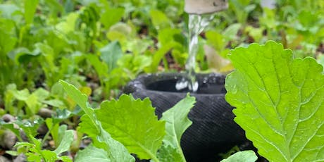 Intro to Aquaponics with Oko Farms: 3-Class Special! tickets
