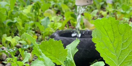 Intro to Aquaponics with Oko Farms: 3-Class Special!