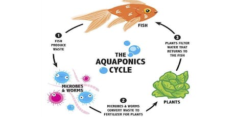 Intro to Aquaponics with Oko Farms: Class 1 (Science & Biology) tickets
