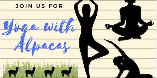 Yoga with Alpacas