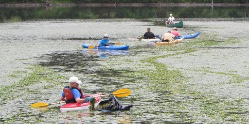 Fifth Annual Water Chestnut Pull