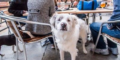 Puppies, Beer & Tacos