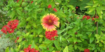 Florida-Friendly Plants for Polk County Landscapers