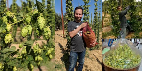Fresh Hop Brew Day: Brew with Hops Right Off the Vine tickets