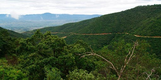 Oaxaca Birding Tour Central Valley, Highlands, Isthmus, Pacific Lowlands & Coast