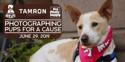 Photographing Pups for A Cause: with TAMRON & Family Dogs New Life