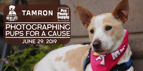 Photographing Pups for A Cause: with TAMRON & Family Dogs New Life tickets